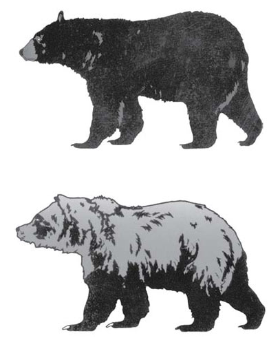 black bear (top) and grizzly bear (bottom) source:nps.gov
