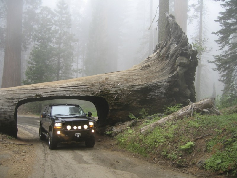 Redwoods National Park Drive Through Tree