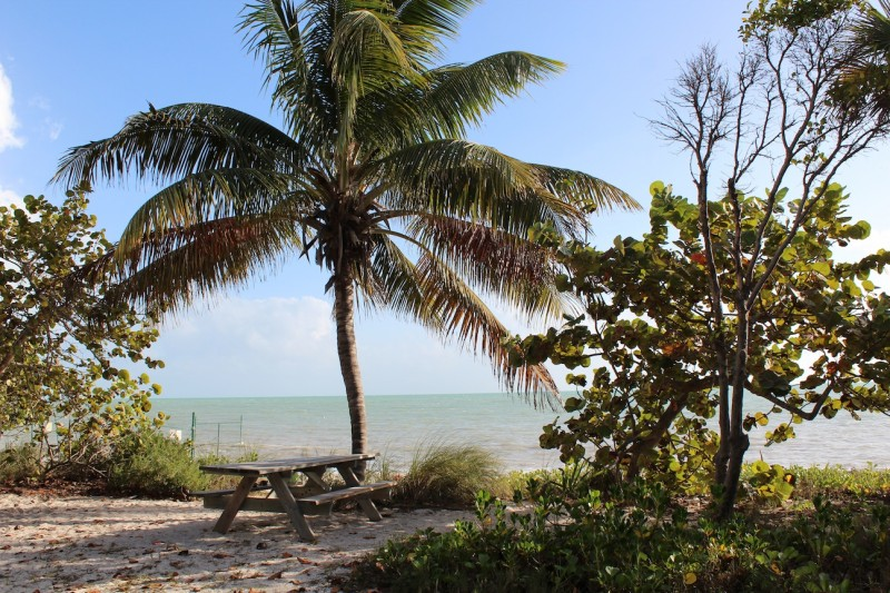 Shady picnic areas are abundant in Fort Zachary Taylor Historic State Park.