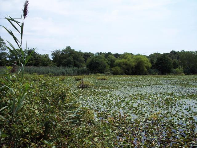 Clay Pit Ponds  Preserve (NY) Photo