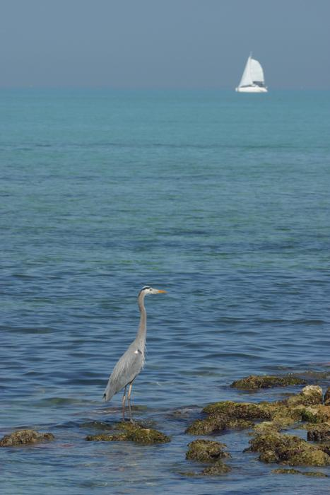 Heron Sailboat