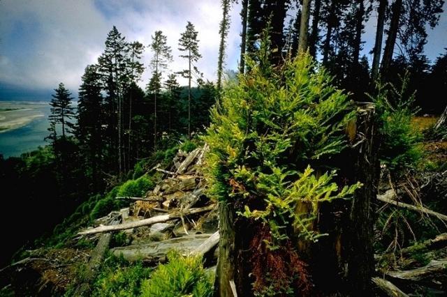 Redwood, 2653