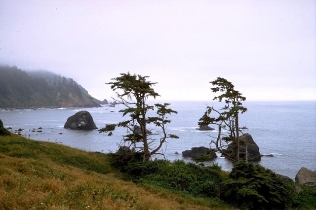 Redwood, 9339