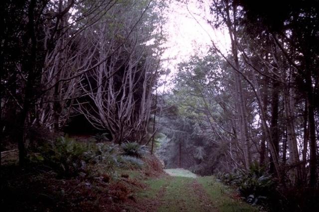 Redwood, 9342