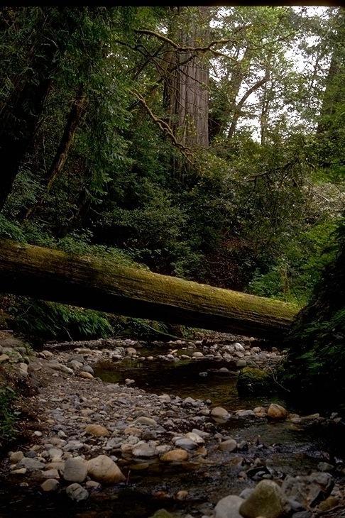 Redwood, 9344