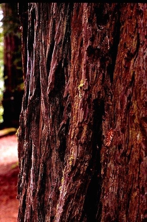 Redwood, 9354