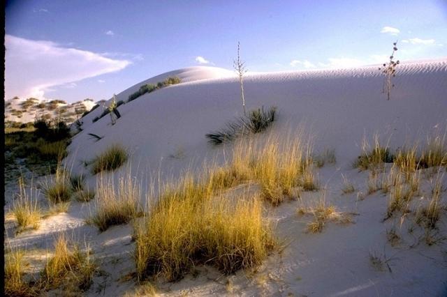 White Sands, 2684