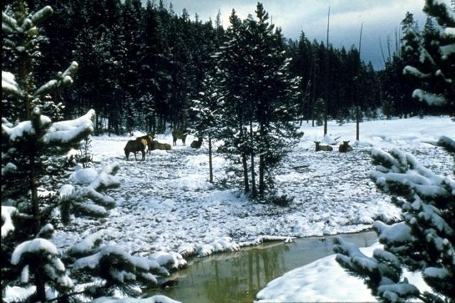 Yellowstone, 3412