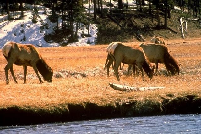 Yellowstone, 4574