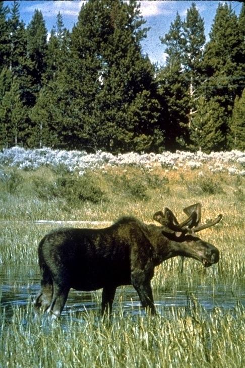 Yellowstone, 4577