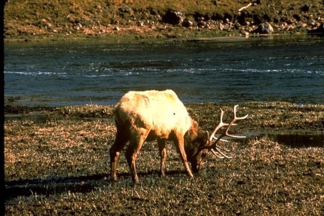 Yellowstone, 4578