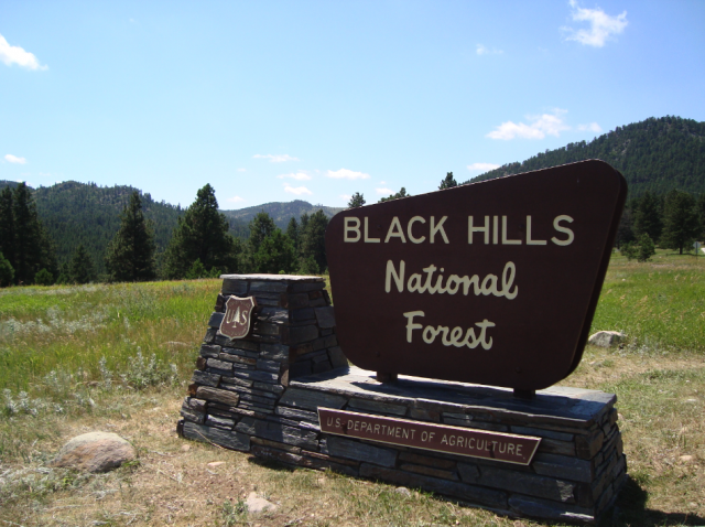 Driving the Peter Norbeck Scenic Byway through Black Hills National Forest