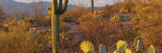 Saguaro National Park Camping Map Saguaro National Park