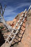 Bandelier : Wooden Ladder To Dwelling