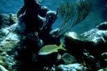 Buck Island Reef : Buck Island Reef, 0648
