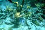 Buck Island Reef : Buck Island Reef, 0650