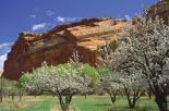 Capitol Reef : Fruita Valley