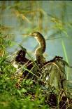 Everglades : Everglades, 1494