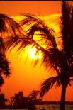 Everglades : Everglades, 3302