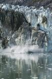 Glacier Bay : Calving Glacier