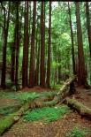 Muir Woods : Muir Woods, 4190
