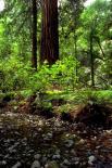 Muir Woods : Muir Woods, 4194