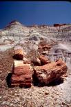 Petrified Forest : Petrified Forest, 4622