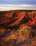 Petrified Forest : Painted Desert