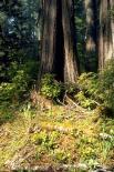 Redwood : Redwood, 2151