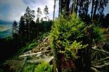 Redwood : Redwood, 2653
