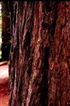 Redwood : Redwood, 9354