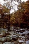 Rock Creek : Rock Creek, 2650