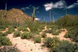 Saguaro : Saguaro, 4638