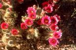 Saguaro : Saguaro, 4641