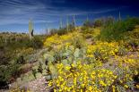 Saguaro : Saguaro, 4646