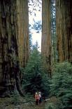 Sequoia & Kings Canyon : Sequoia & Kings Canyon, 4517