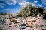 White Sands : White Sands, 3781