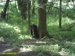 Smoky Mountains : Baby Black Bear