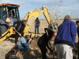 Mesilla Valley Bosque (NM) : Tree Planting with the Governor