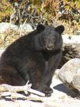 Living Desert Zoo & Gardens (NM) : The Painting Bear