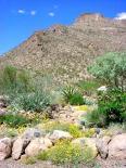 Oliver Lee Memorial (NM) : Desert Gardens