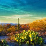 Saguaro : Saguaro National Park