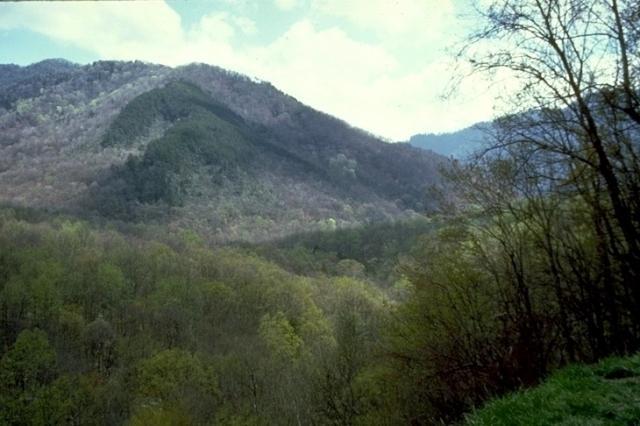Smoky Mountains, 8831