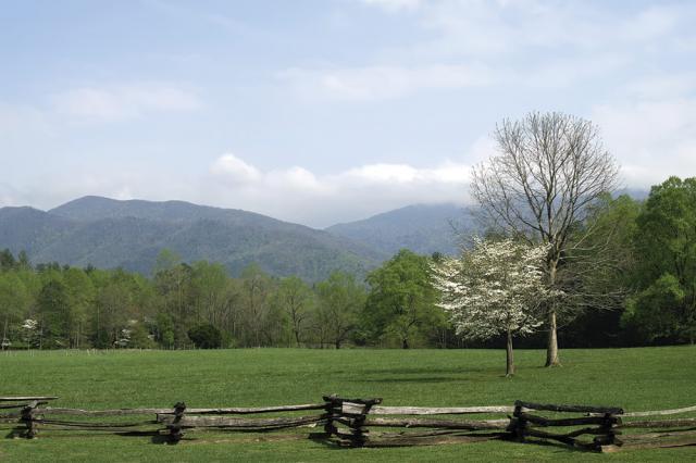 Spring Fence 2