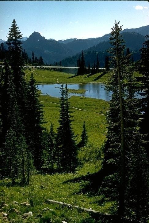 Mt.  Rainier, 3181