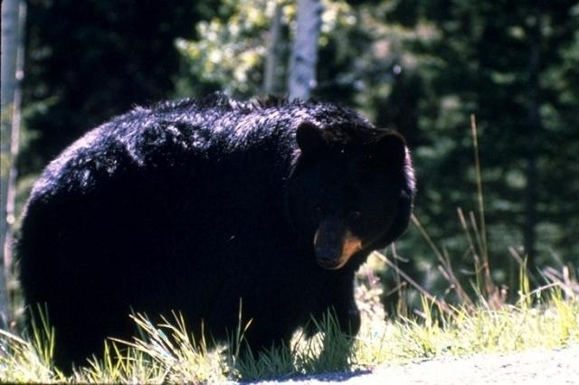 Yellowstone, 3414
