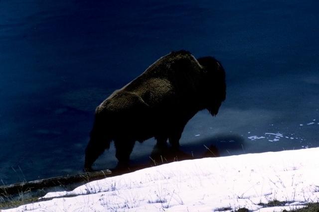 Yellowstone, 3994