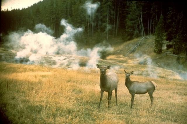 Yellowstone, 4576