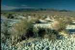 Death Valley : Death Valley, 3477