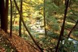 Delaware Water Gap : Delaware Water Gap, 4672